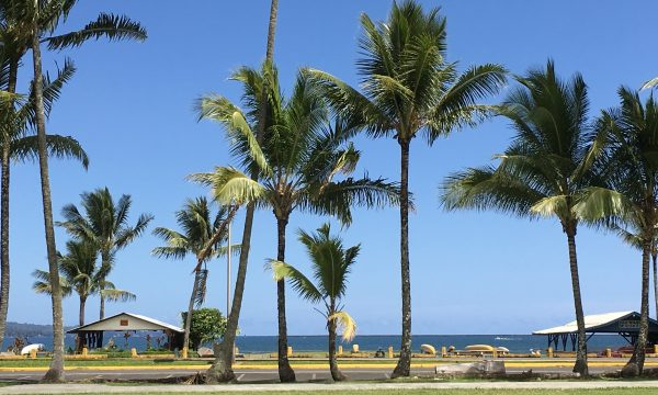 NPの活動の実際とDNP教育プログラム(Hawaii視察研修)